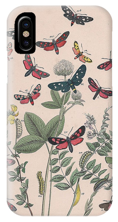 Butterfly IPhone X Case featuring the drawing Zygaenidae - Syntomidae by W Kirby