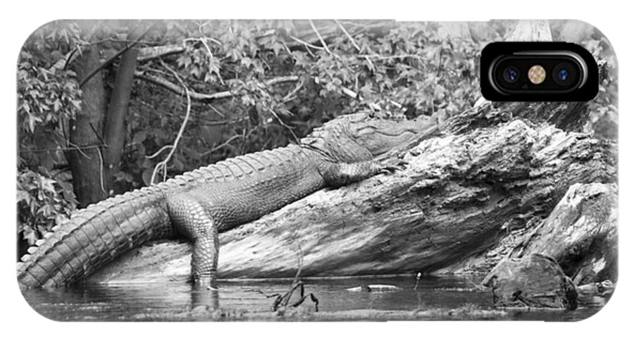 Alligator IPhone X Case featuring the photograph I Have Survived by Jack Norton