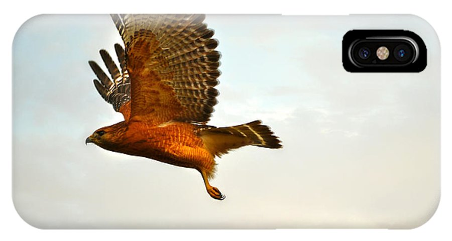 Landscape IPhone X Case featuring the photograph Majestic Red Shoulder Hawk by Peggy Franz