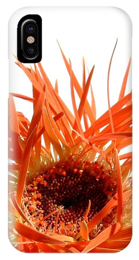 Gerbera Photographs IPhone X Case featuring the photograph 0687c-024 by Kimberlie Gerner