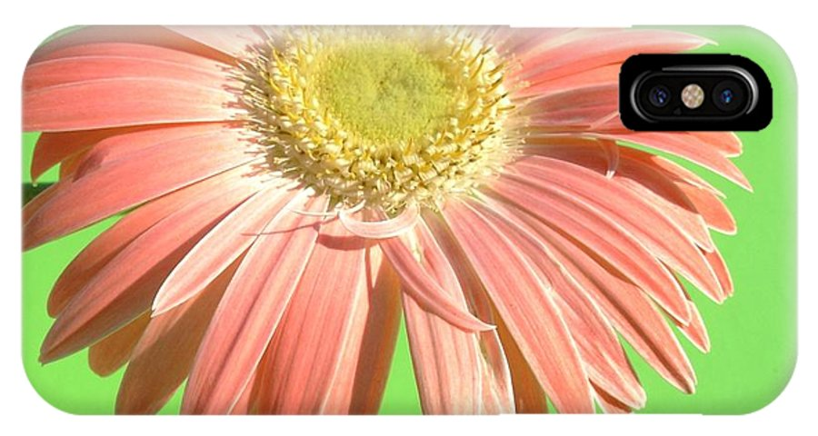 Gerbera Photographs IPhone X Case featuring the photograph 0724c1-002 by Kimberlie Gerner
