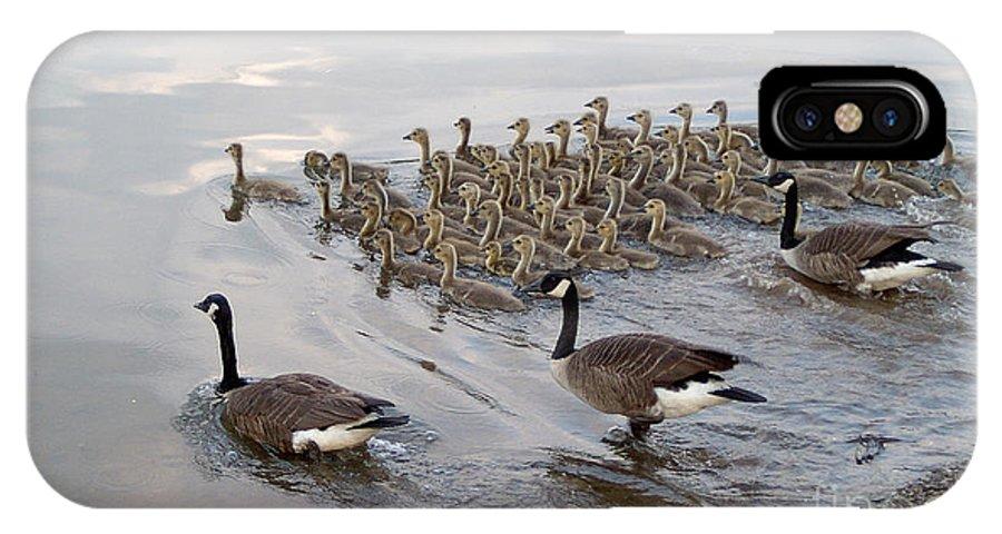 Ducks Ducklings Water Lake Breeding IPhone X Case featuring the photograph 1 2 3 Go by Vilas Malankar
