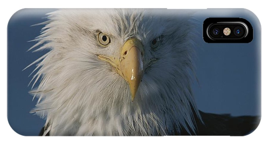 northern American Bald Eagles IPhone X / XS Case featuring the photograph A Close View Of A Northern American by Norbert Rosing