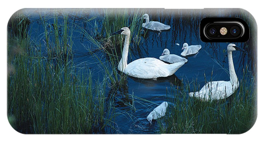 Animals IPhone X / XS Case featuring the photograph A Family Of Trumpeter Swans Swims by Melissa Farlow