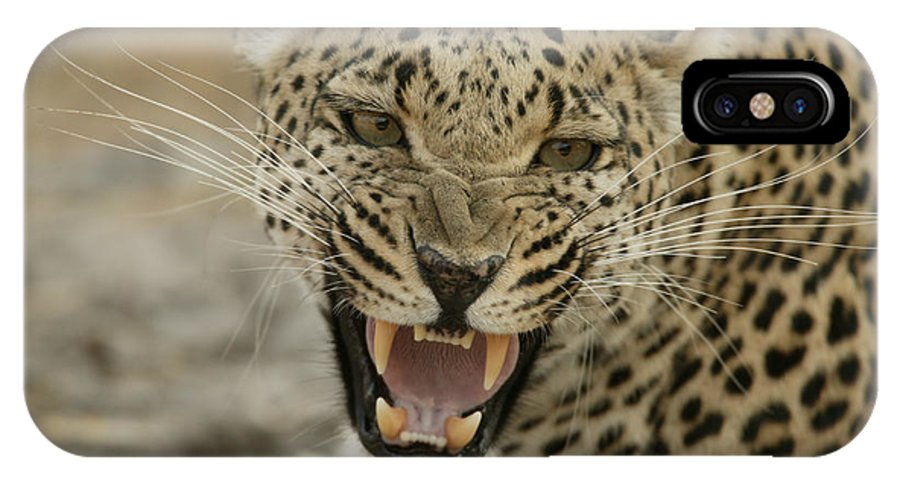 Mombo IPhone X Case featuring the photograph A Female Leopard, Panthera Pardus by Beverly Joubert