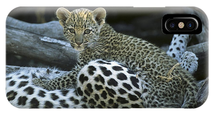 Africa IPhone X / XS Case featuring the photograph A Leopard Cub, Panthera Pardus by Beverly Joubert