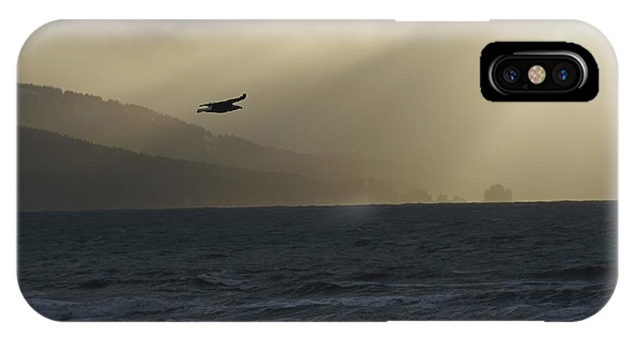 North America IPhone X / XS Case featuring the photograph A Silhouetted Northern American Bald by Norbert Rosing