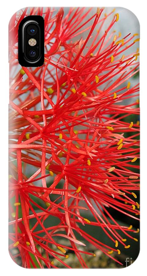 African Blood Lily IPhone X Case featuring the photograph African Blood Lily Or Fireball Lily by J McCombie