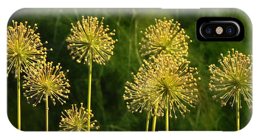 Flowers IPhone X / XS Case featuring the photograph Allium by Francesa Miller