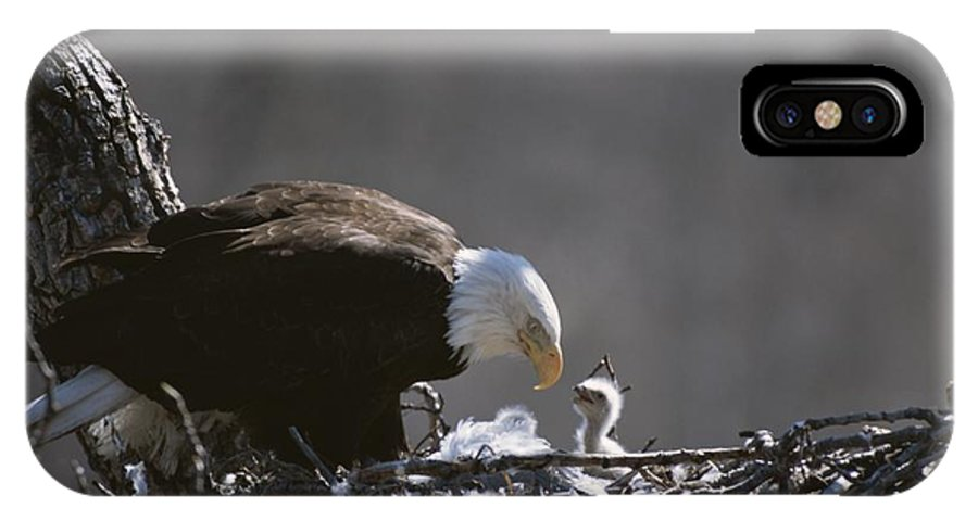 Animals IPhone X / XS Case featuring the photograph An American Bald Eagle And Chick by Roy Toft