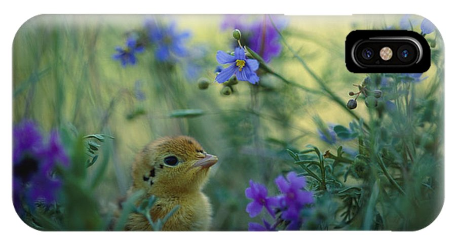 Animals IPhone X / XS Case featuring the photograph An Attwaters Prairie Chick Surrounded by Joel Sartore