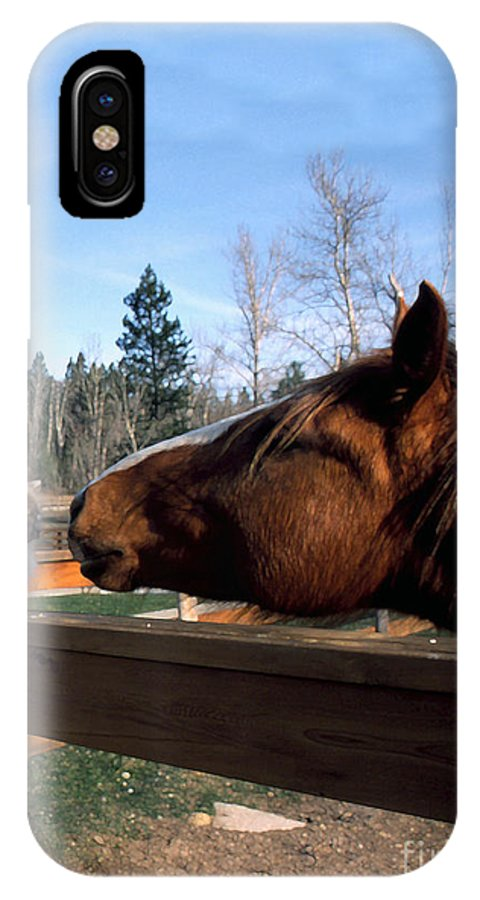 Usa IPhone X Case featuring the photograph Best Friends by Thomas R Fletcher