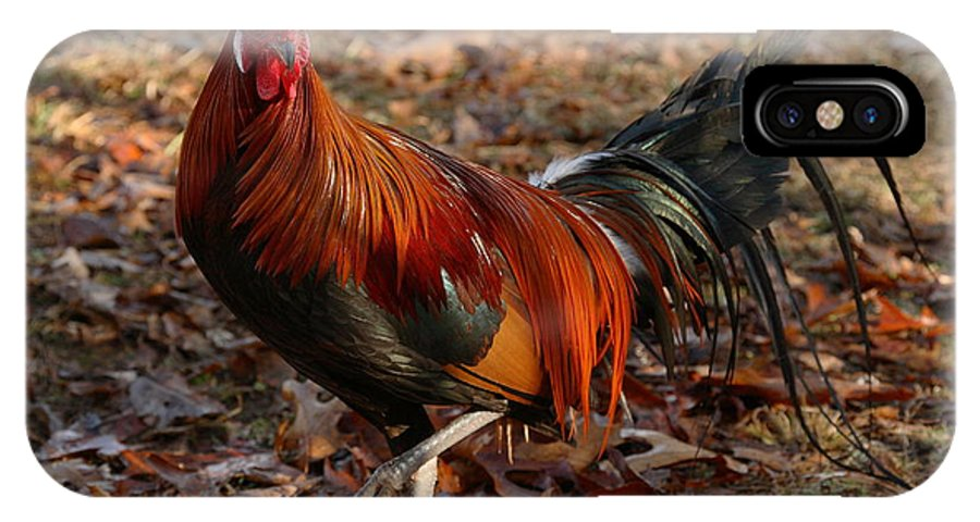 Chicken IPhone X Case featuring the photograph Black Breasted Red Phoenix Rooster by Michael Dougherty