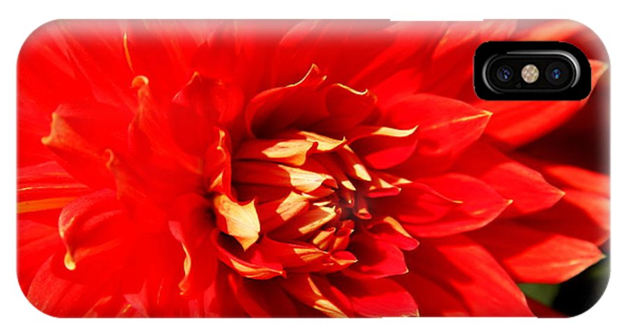 Red Dahlia IPhone X Case featuring the photograph Blazing Red by Christiane Schulze Art And Photography