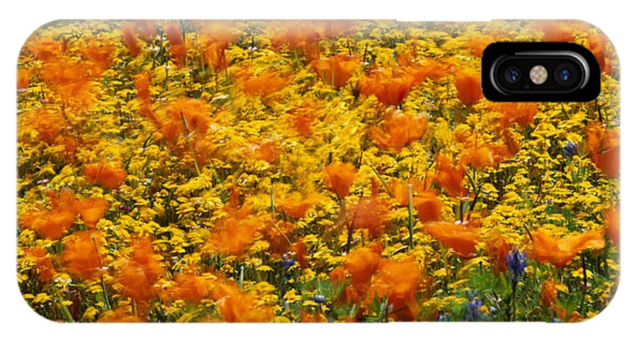 Fields IPhone X / XS Case featuring the photograph California Poppies And Goldfields Dance by Jonathan Blair