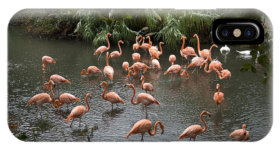 Wichita IPhone X Case featuring the photograph Caribbean Flamingos At The Zoo by Joel Sartore