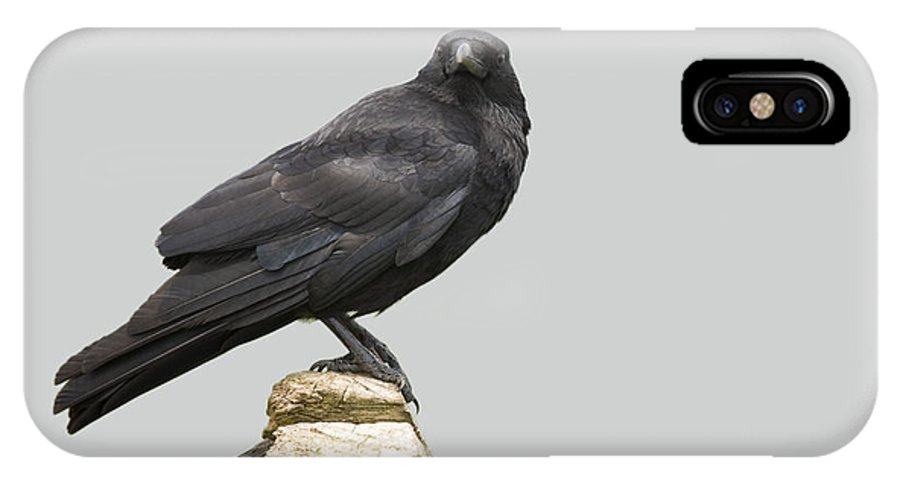 Corvus Corone IPhone X / XS Case featuring the photograph Carrion Crow by Power And Syred