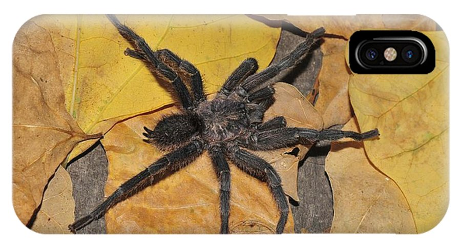 1 IPhone X / XS Case featuring the photograph Chaetopelma Olivaceum by Photostock-israel
