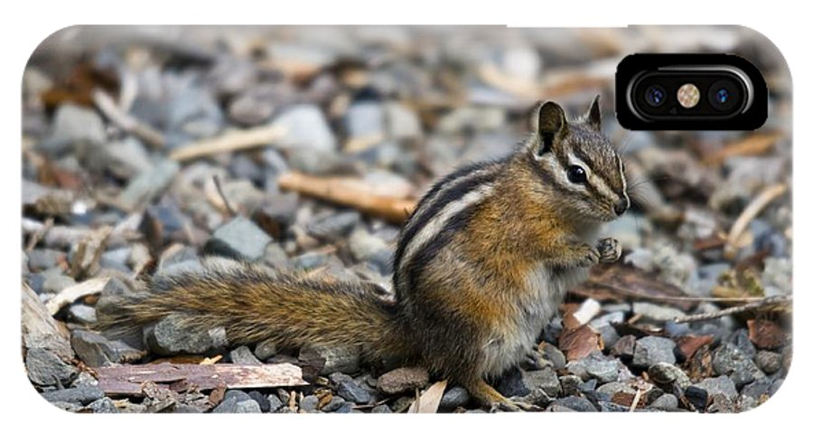 Chipmunk IPhone X Case featuring the photograph Chipmunk by Martin Cooper