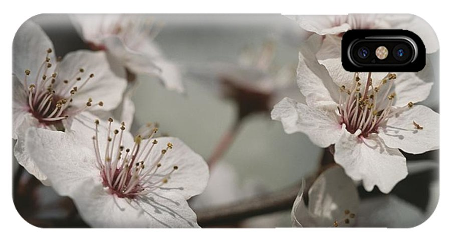 Plant Physiology IPhone X / XS Case featuring the photograph Close View Of Cherry Blossoms by Darlyne A. Murawski