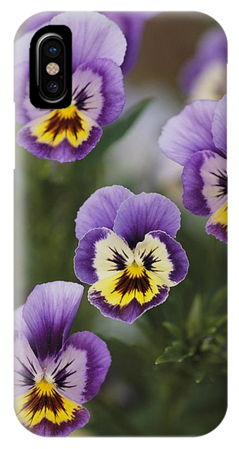 Plants IPhone X / XS Case featuring the photograph Close View Of Pansy Blossoms by Darlyne A. Murawski