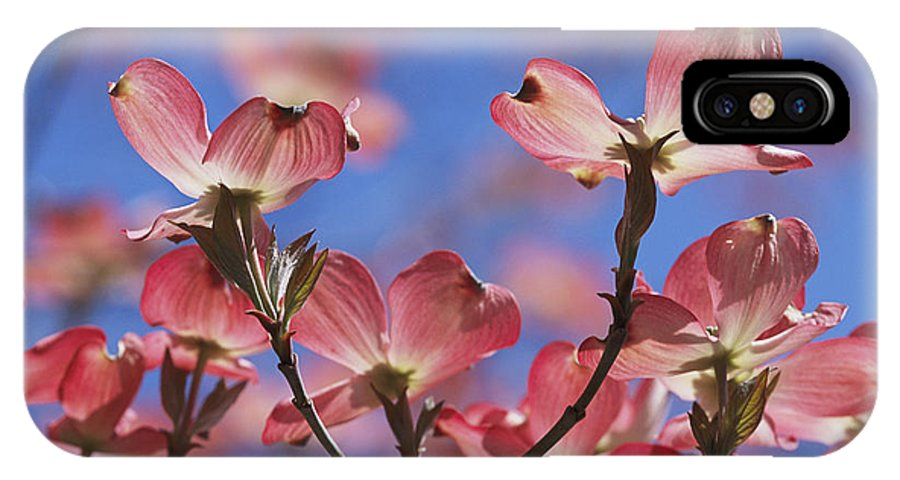 Plants IPhone X / XS Case featuring the photograph Close View Of Pink Dogwood Blossoms by Darlyne A. Murawski