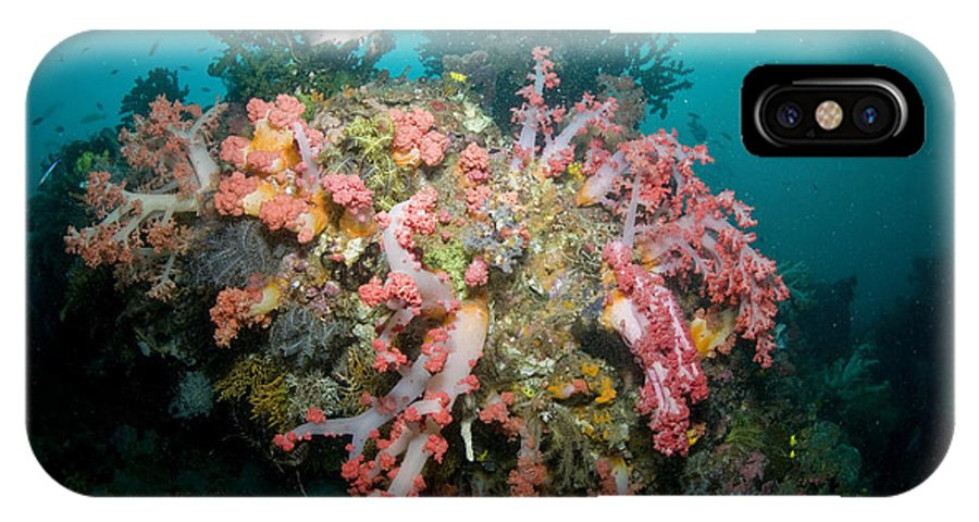 Wide-angle IPhone X Case featuring the photograph Colorful Reef Scene, Komodo, Indonesia by Mathieu Meur
