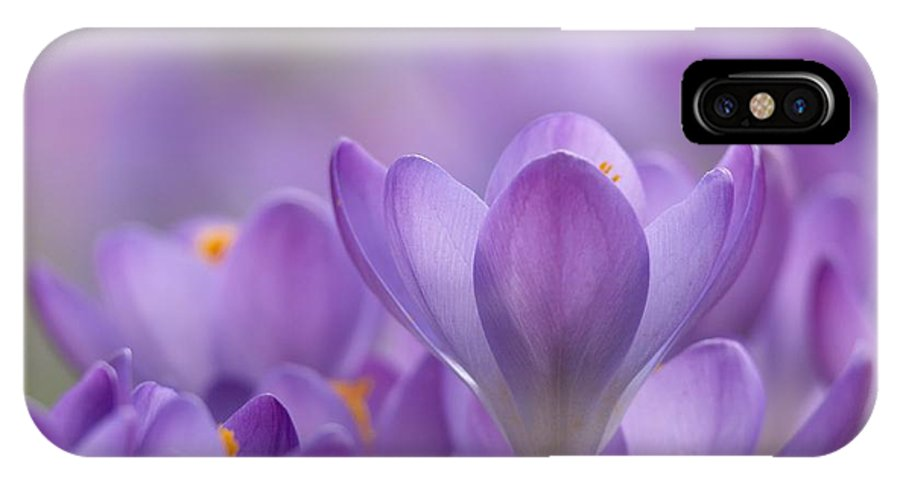 Biological IPhone X Case featuring the photograph Crocus Tommasinianus Flowers by Adrian Bicker