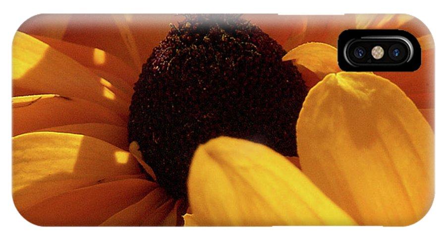 Jouko Lehto IPhone X Case featuring the photograph Cutleaf Tiger Eye by Jouko Lehto