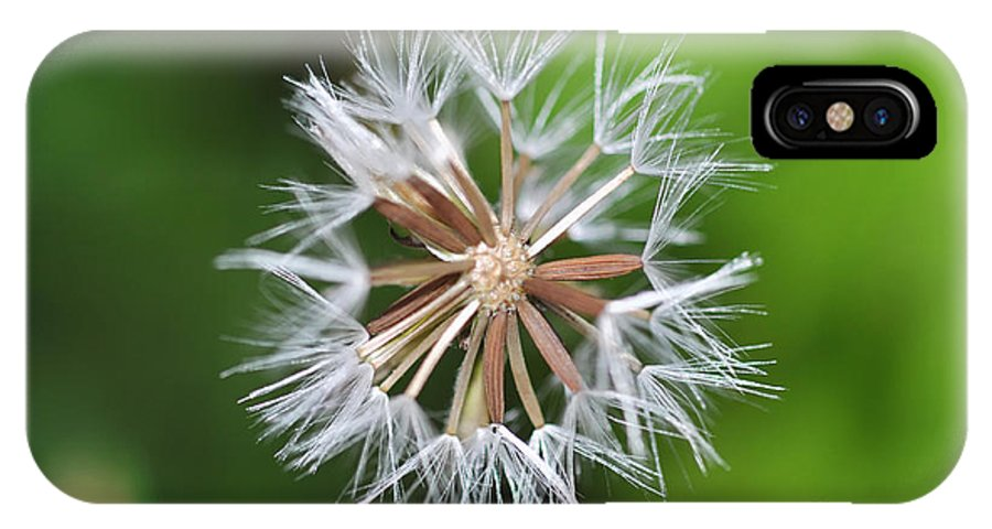 Dandelion IPhone X Case featuring the photograph Dandelion by Mats Silvan