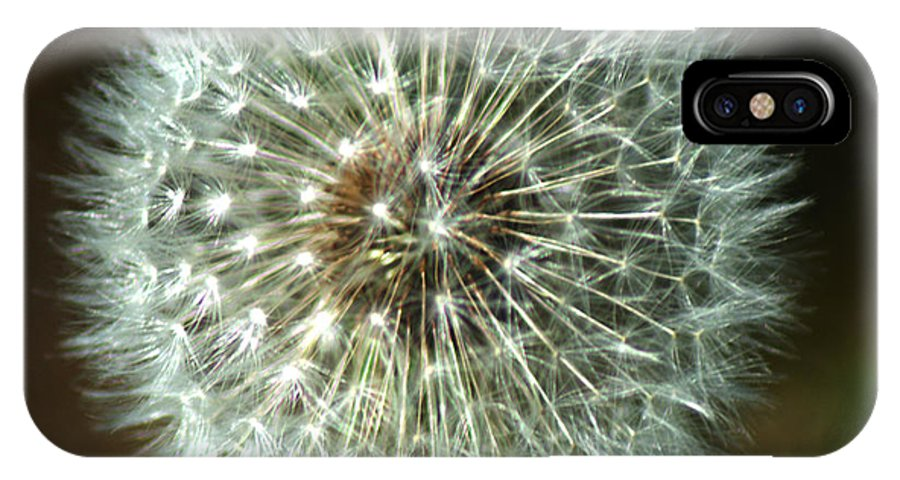 Dandelion IPhone X Case featuring the photograph Dandelion Seed Head by Chris Day