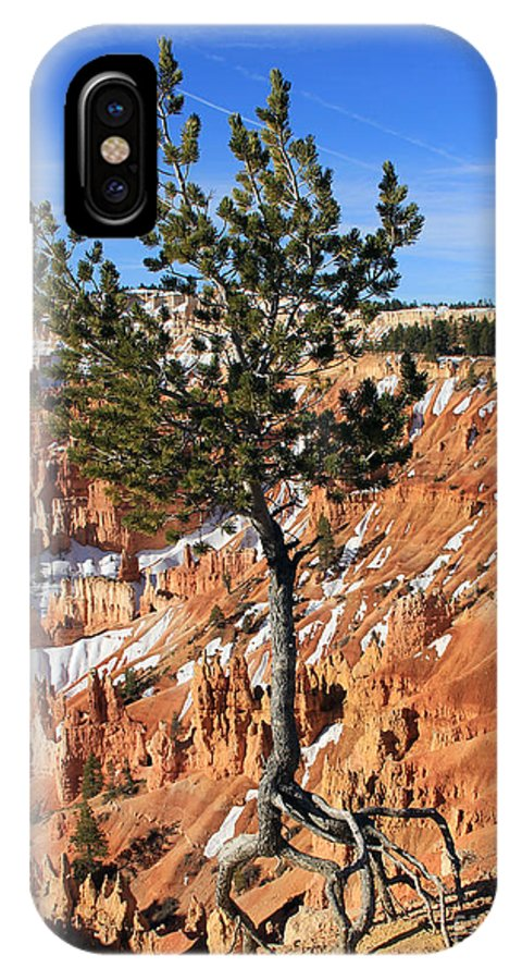Determined Tree IPhone X Case featuring the photograph Determined Tree by Jack Schultz