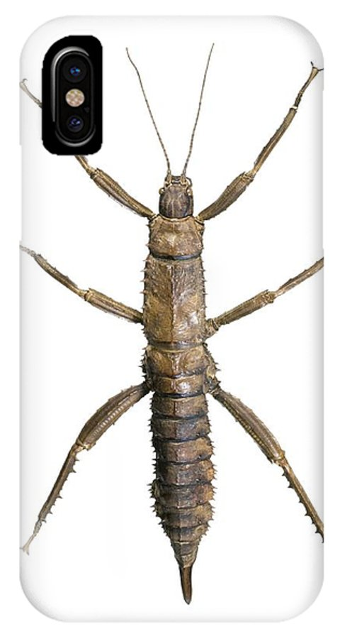 Eurycantha Horrida IPhone X / XS Case featuring the photograph Eurycantha Stick Insect by Lawrence Lawry