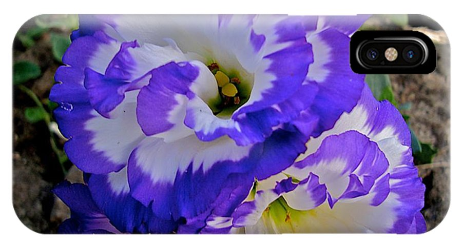 Blooms IPhone X Case featuring the photograph Fertile by Joseph Yarbrough