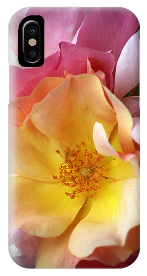 Flower IPhone X Case featuring the photograph Floral 20 by Carol Ann Thomas