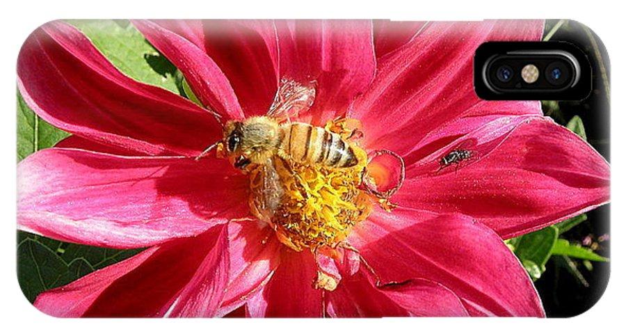 Honey IPhone X Case featuring the photograph Gathering Nectar by Kim Galluzzo Wozniak