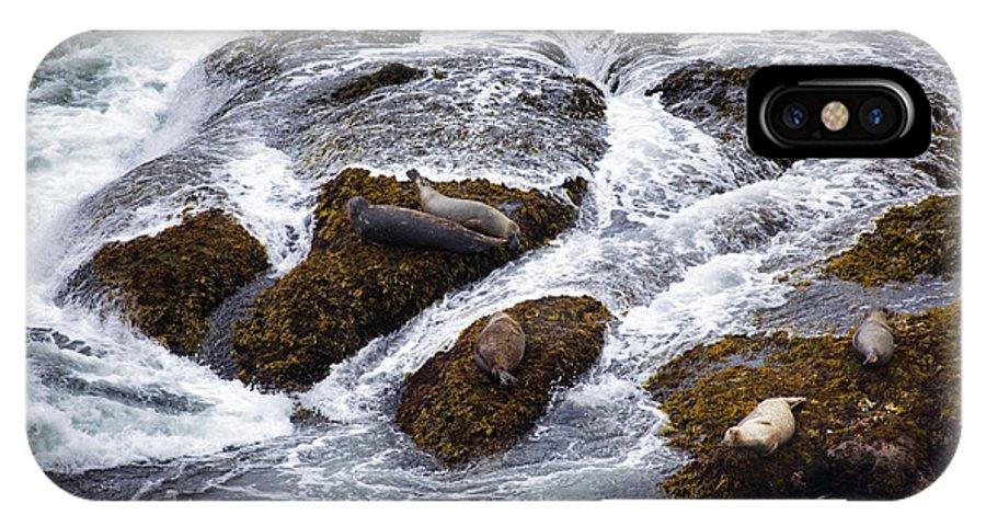 Harbor Seals IPhone X Case featuring the photograph Harbor Seals by Karen Ulvestad