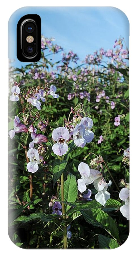 Impatiens Glandulifera IPhone X / XS Case featuring the photograph Himalayan Balsam (impatiens Glandulifer) by Cordelia Molloy