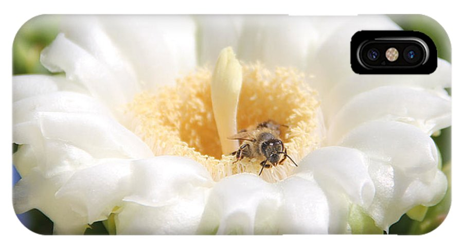 Arizona IPhone X Case featuring the photograph Honey Bee In Cactus by Brenda Deem