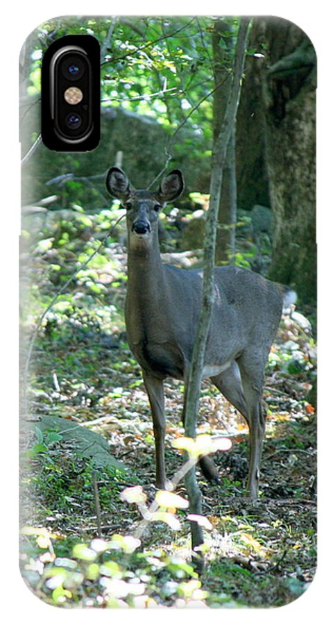 Deer IPhone X Case featuring the photograph Inquisitive by Neal Eslinger
