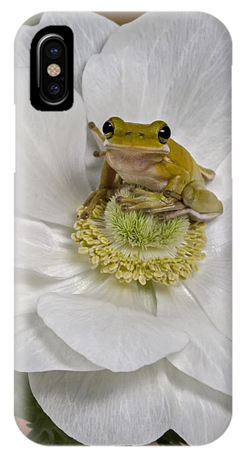 Green Tree Frog IPhone X Case featuring the photograph Kermit by Susan Candelario