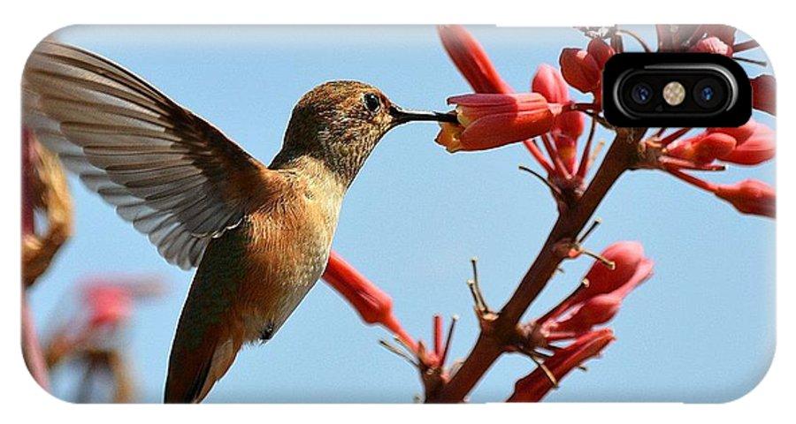 Hummingbird IPhone X Case featuring the photograph Lightness by Fraida Gutovich