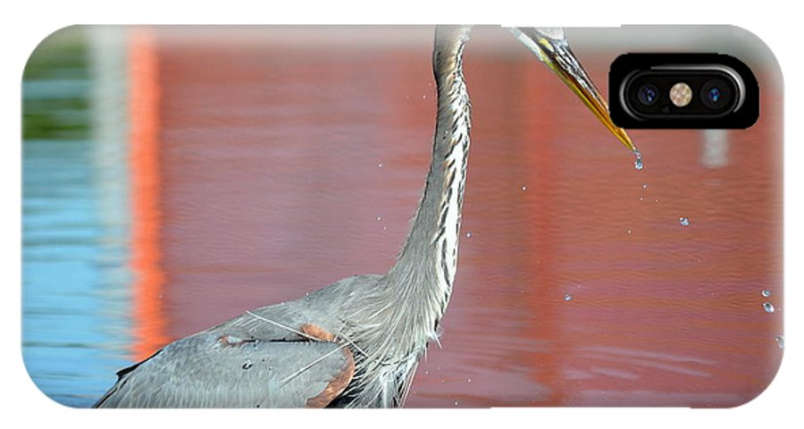 Great Blue Heron IPhone X Case featuring the photograph Missed Opportunity by Fraida Gutovich