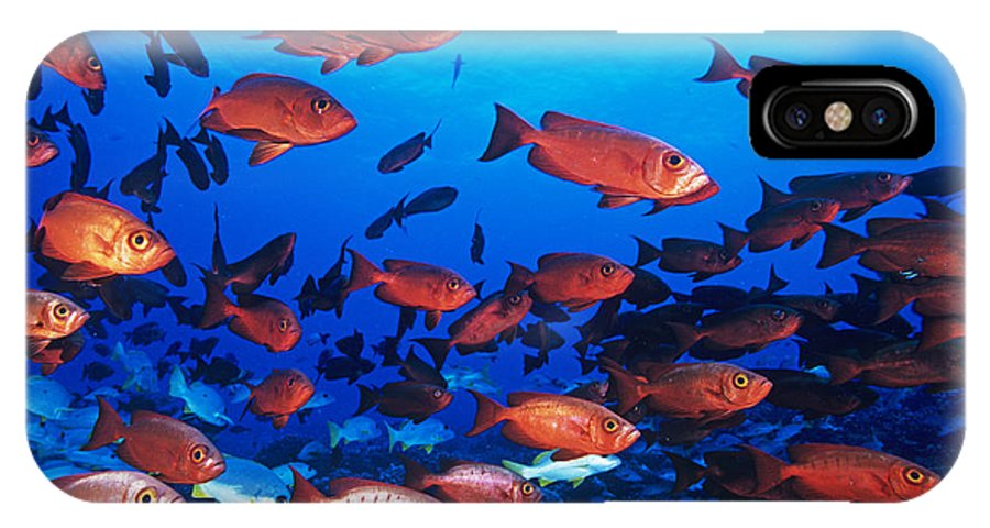 Priacanthus Hamrur IPhone X Case featuring the photograph Moontail Bullseye Fish by Alexis Rosenfeld