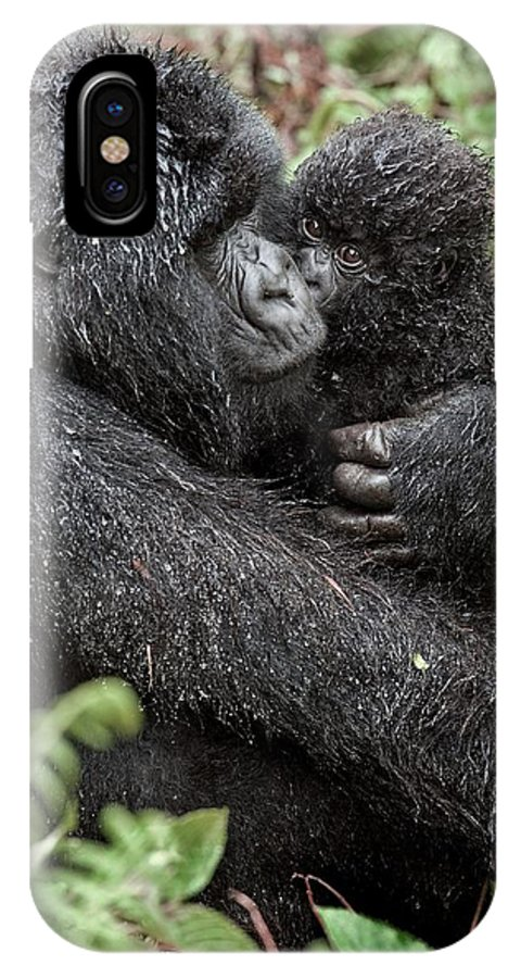 Mountain Gorilla IPhone X / XS Case featuring the photograph Mountain Gorilla And Infant by Tony Camacho