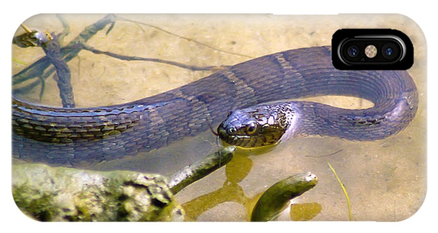 Brian Wallace IPhone X Case featuring the photograph Northern Water Snake by Brian Wallace