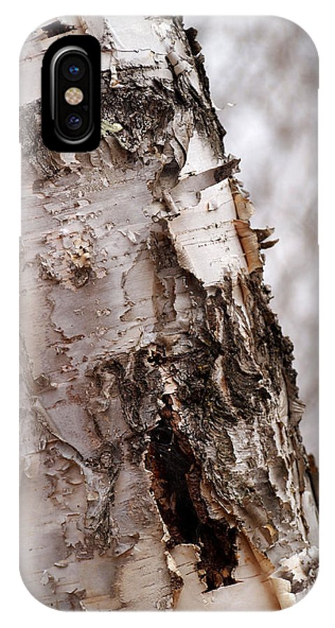Birch Tree IPhone X Case featuring the photograph November Birch by Angie Rea