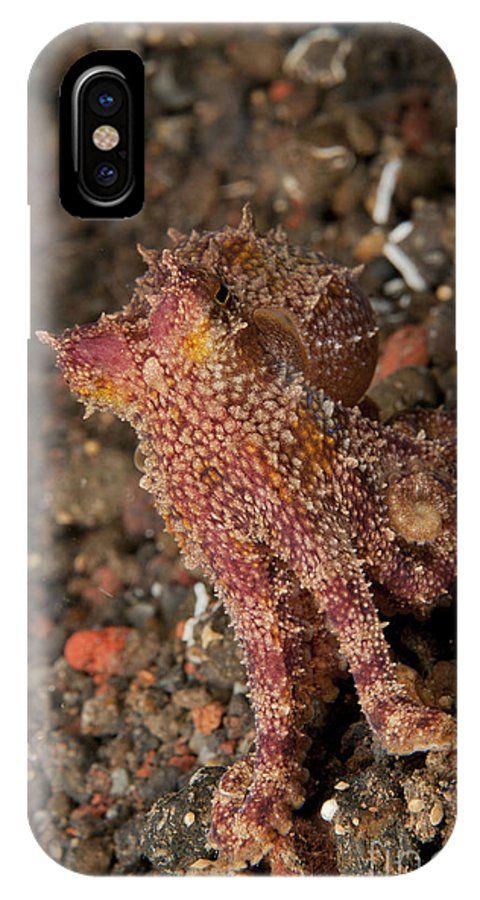 Cephalopod IPhone X Case featuring the photograph Ocellate Octopus With Two Blue Spots by Mathieu Meur