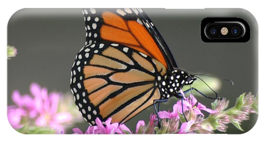 Buttergly IPhone X Case featuring the photograph On The Edge by Living Color Photography Lorraine Lynch
