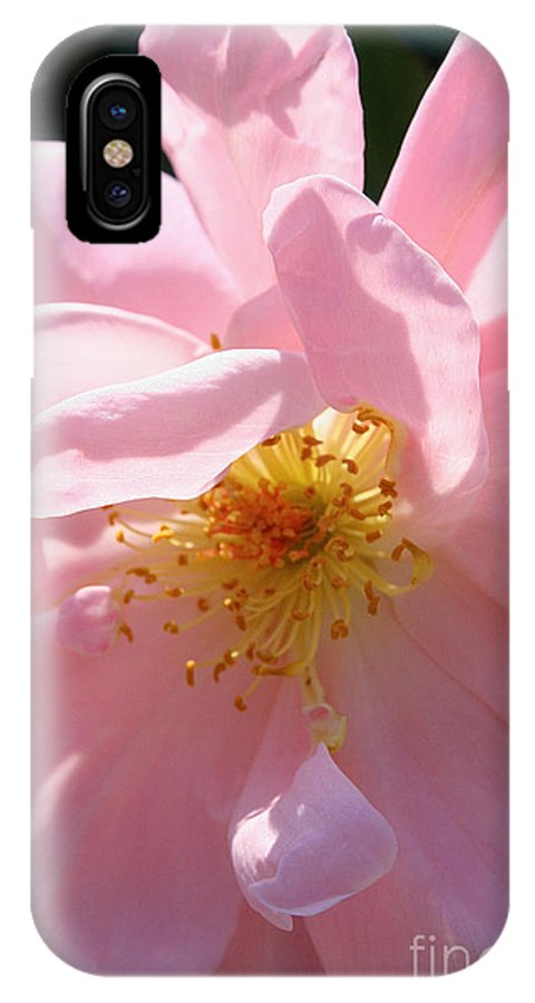 Outdoors IPhone X Case featuring the photograph Pastel Petals by Susan Herber